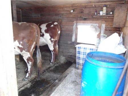 Как построить сарай для коров